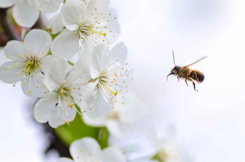 beautiful beauty bee bloom
