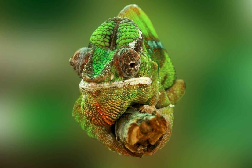 animal colorful head green